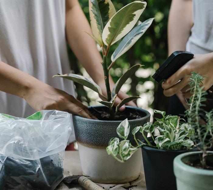 7 Plantas dificeis de cuidar que valem a pena 1 - 7 PLANTAS DIFÍCEIS de cuidar que valem a pena