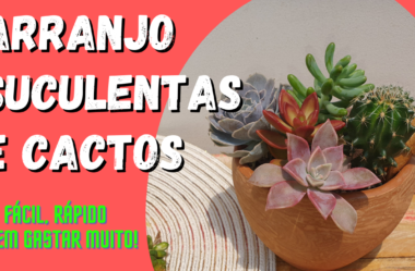Novo Vídeo: ARRANJO de Suculentas e Cactos | FÁCIL, RÁPIDO E SEM GASTAR MUITO!