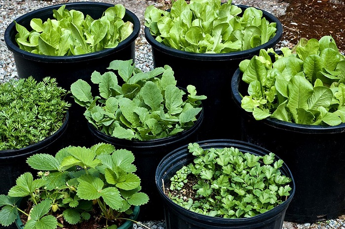 Ideias de jardinagem para voce comecar12 - IDEIAS DE JARDINAGEM: 9 DICAS PARA VOCÊ COMEÇAR