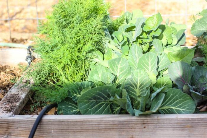 Ideias de jardinagem para voce comecar15 - IDEIAS DE JARDINAGEM: 9 DICAS PARA VOCÊ COMEÇAR