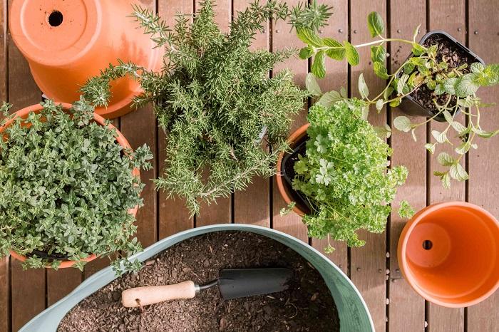 Ideias de jardinagem para voce comecar2 - IDEIAS DE JARDINAGEM: 9 DICAS PARA VOCÊ COMEÇAR