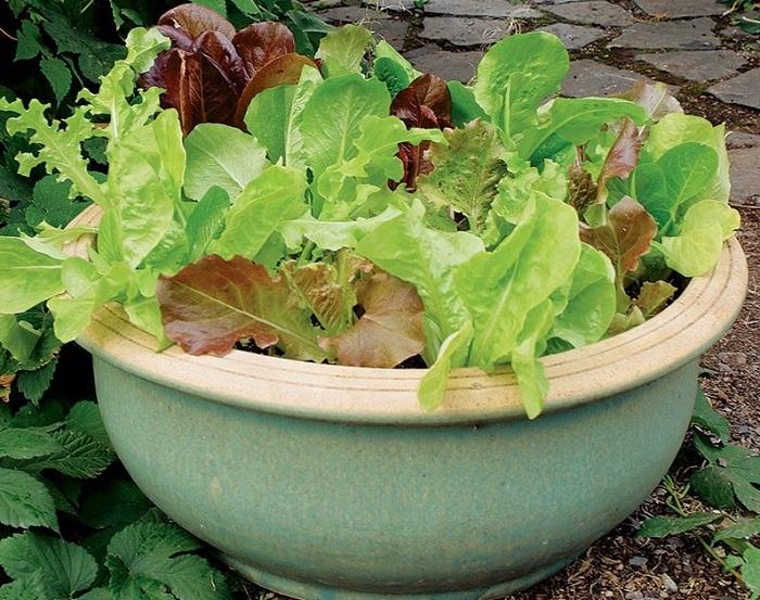 Ideias de jardinagem para voce comecar3 - IDEIAS DE JARDINAGEM: 9 DICAS PARA VOCÊ COMEÇAR