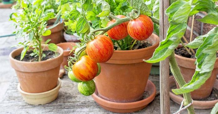 Ideias de jardinagem para voce comecar5 - IDEIAS DE JARDINAGEM: 9 DICAS PARA VOCÊ COMEÇAR