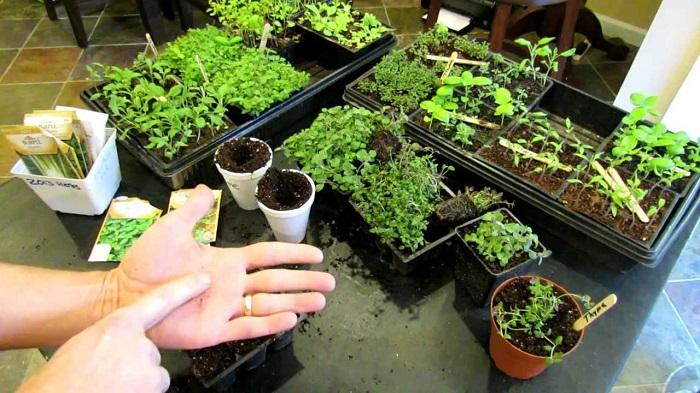 Ideias de jardinagem para voce comecar6 1 - IDEIAS DE JARDINAGEM: 9 DICAS PARA VOCÊ COMEÇAR
