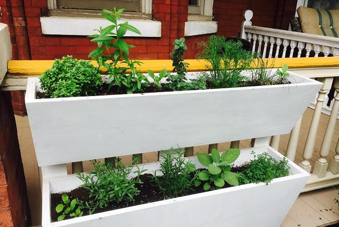Ideias de jardinagem para voce comecar9 - IDEIAS DE JARDINAGEM: 9 DICAS PARA VOCÊ COMEÇAR