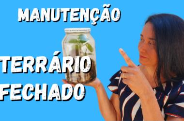 Novo Vídeo: MANUTENÇÃO DE TERRÁRIO FECHADO: Veja como é Fácil Cuidar do seu Terrário!