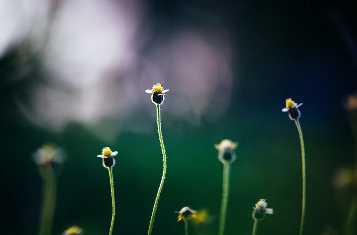 jardim sustentave 9 - JARDIM SUSTENTÁVEL: 10 Passos Para Ter O Seu!