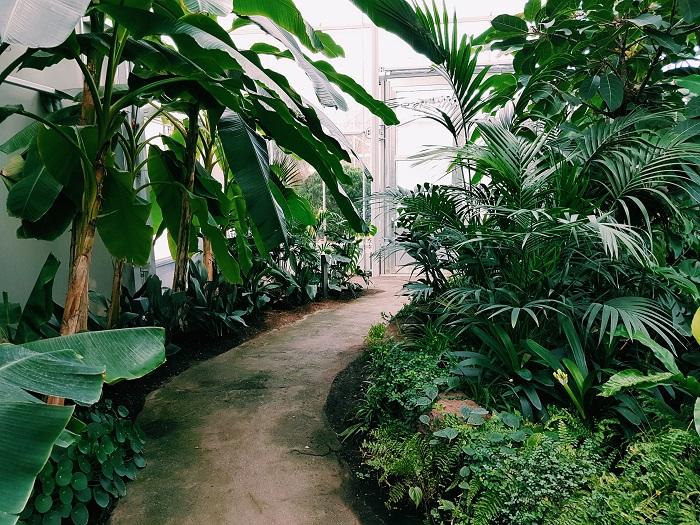 jardim sustentavel 3 - JARDIM SUSTENTÁVEL: 10 Passos Para Ter O Seu!