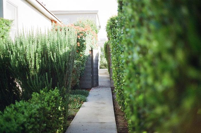 jardim sustentavel 5 - JARDIM SUSTENTÁVEL: 10 Passos Para Ter O Seu!
