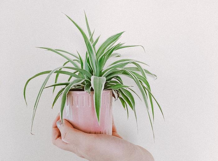 os melhores vasos2 - 4 Dicas para Escolher os MELHORES VASOS PARA PLANTAS