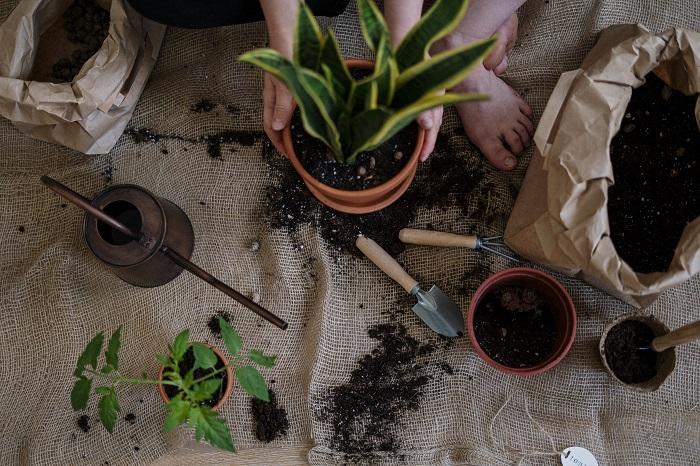 os melhores vasos5 - 4 Dicas para Escolher os MELHORES VASOS PARA PLANTAS