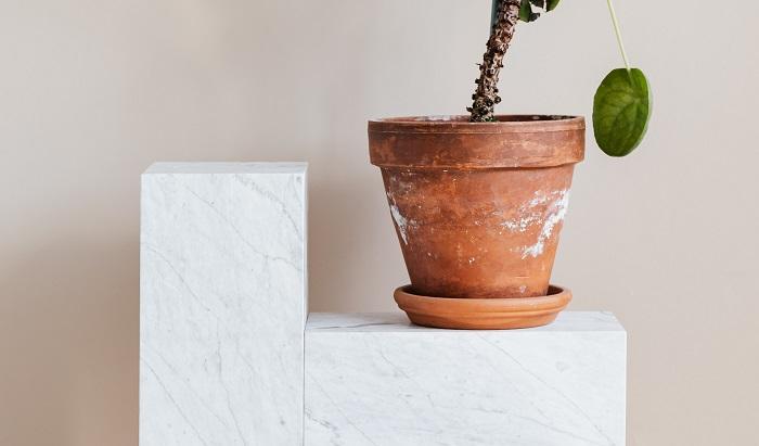 os melhores vasos6 - 4 Dicas para Escolher os MELHORES VASOS PARA PLANTAS