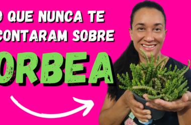 Novo Vídeo: O Que Nunca Te Contaram Sobre a Orbea! Você Vai se SURPREENDER!