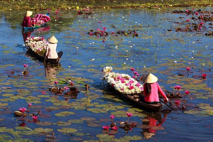 lotus3 - FLOR DE LÓTUS: 8 Curiosidades Desta Planta Aquática Muito Especial