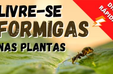 Novo Vídeo: Como Eliminar Formigas nas Plantas  – A Melhor Dica [NATURARTE RESPONDE]