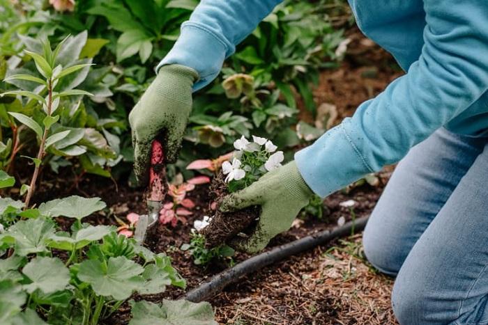 jardineiro 7 - SERVIÇO DE JARDINAGEM | 6 DICAS para Você Contratar