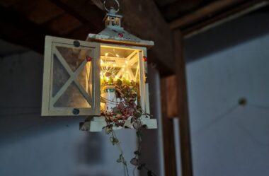 Novo Vídeo: Você Nunca Viu Antes! LANTERNA DE SUCULENTAS – Plante esta NOVIDADE!