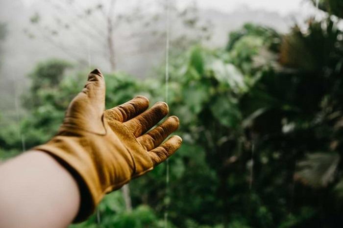 jardineiro - SERVIÇO DE JARDINAGEM | 6 DICAS para Você Contratar