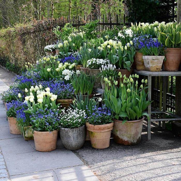 belo jardim11 - 10 Dicas para Você Criar Belos Jardins