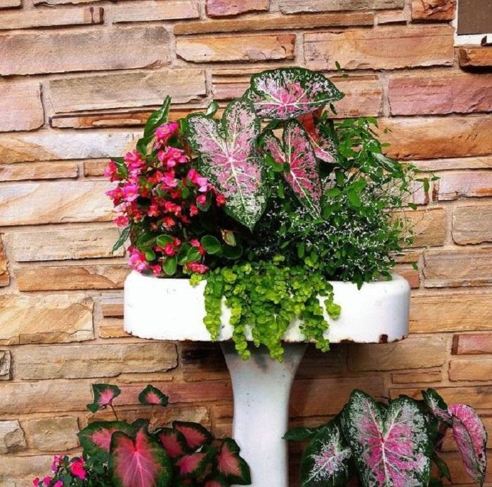 belo jardim12 - 10 Dicas para Você Criar Belos Jardins