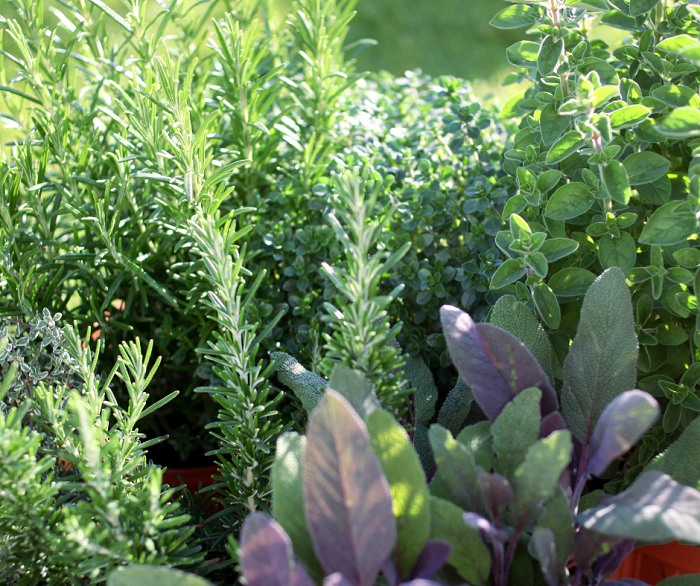 belo jardim9 - 10 Dicas para Você Criar Belos Jardins