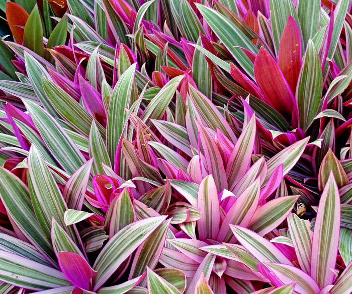 belos jardins5 - 10 Dicas para Você Criar Belos Jardins