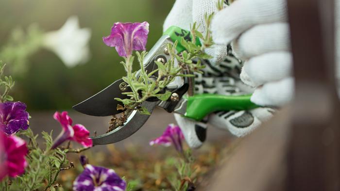 florescer 2 - 8 SEGREDOS DAS FLORES para ter um Jardim Muito Mais Florido