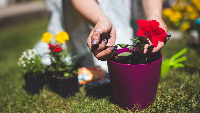 florescer 3 - 8 SEGREDOS DAS FLORES para ter um Jardim Muito Mais Florido