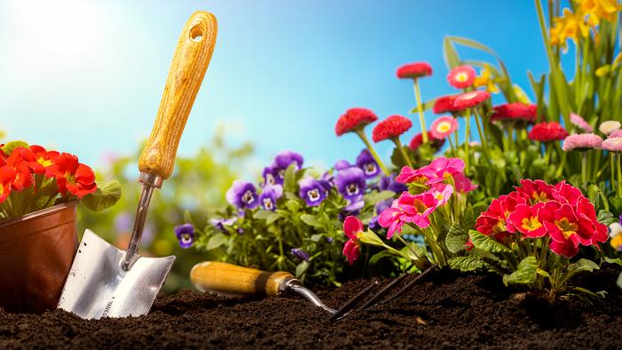 florescer 5 - 8 SEGREDOS DAS FLORES para ter um Jardim Muito Mais Florido