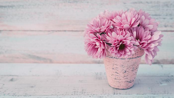 florescer 8 - 8 SEGREDOS DAS FLORES para ter um Jardim Muito Mais Florido