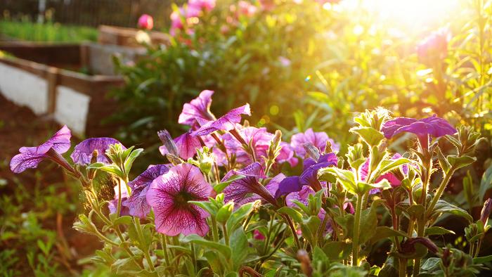 florescer - 8 SEGREDOS DAS FLORES para ter um Jardim Muito Mais Florido