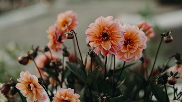 os 9 segredos - 8 SEGREDOS DAS FLORES para ter um Jardim Muito Mais Florido