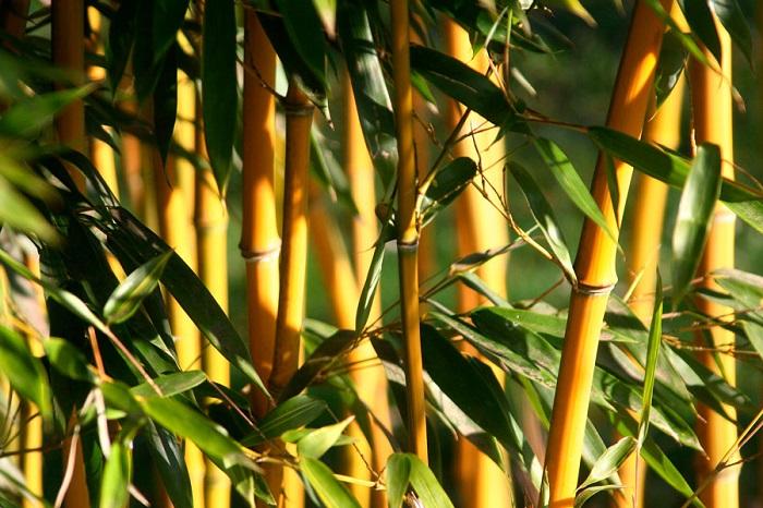 Bambu - 12 IDEIAS De Projeto de Jardim para uma ÁREA DE PISCINA