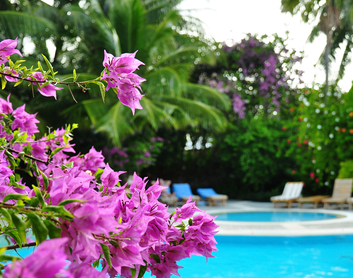 Design de plantas para piscinas - 12 IDEIAS De Projeto de Jardim para uma ÁREA DE PISCINA