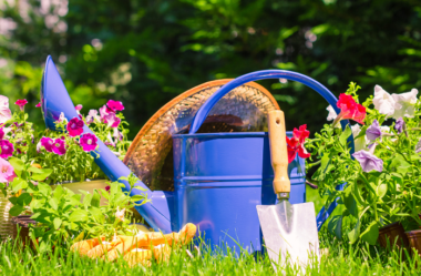 Descubra 17 Fatos Surpreendentes sobre Jardins