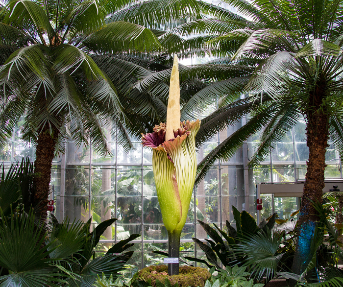 Flor cadaver - Conheça as 12 PLANTAS RARAS do Mundo