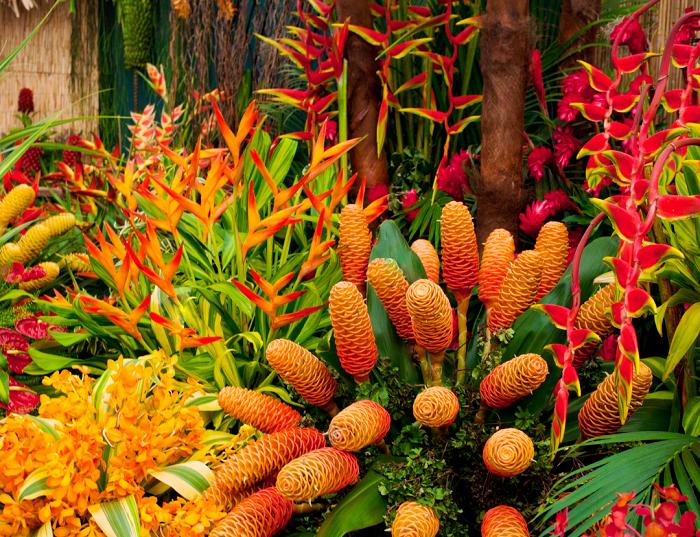 Plantas tropicais - 12 IDEIAS De Projeto de Jardim para uma ÁREA DE PISCINA