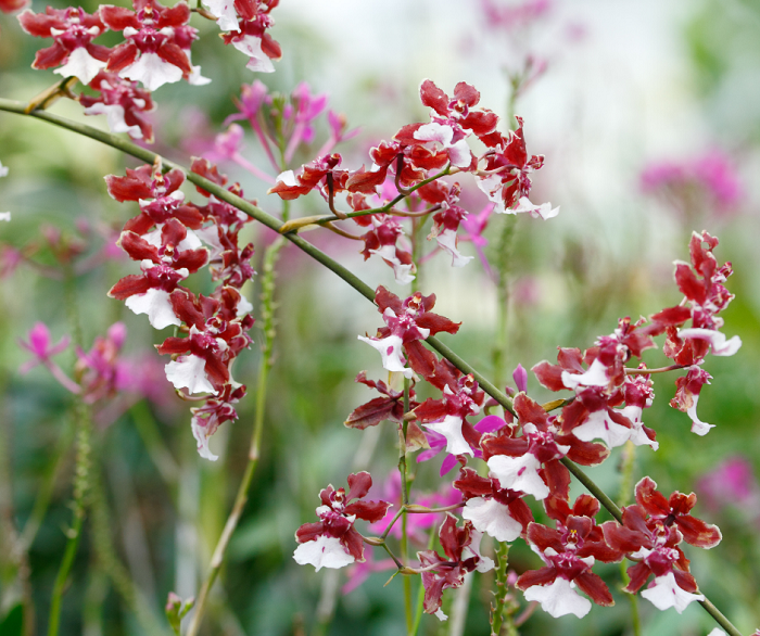 curiosidades sobre jardins 10 - Descubra 17 Fatos Surpreendentes sobre Jardins