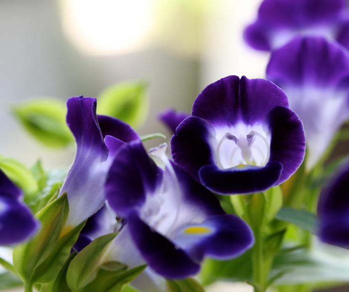 curiosidades sobre jardins 12 - Descubra 17 Fatos Surpreendentes sobre Jardins