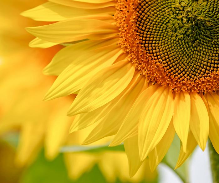 curiosidades sobre jardins 5 - Descubra 17 Fatos Surpreendentes sobre Jardins