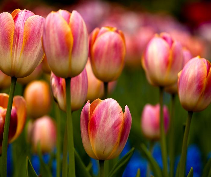 curiosidades sobre jardins15 - Descubra 17 Fatos Surpreendentes sobre Jardins