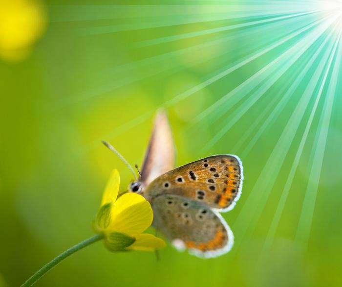 curiosidades sobre jardins8 - Descubra 17 Fatos Surpreendentes sobre Jardins