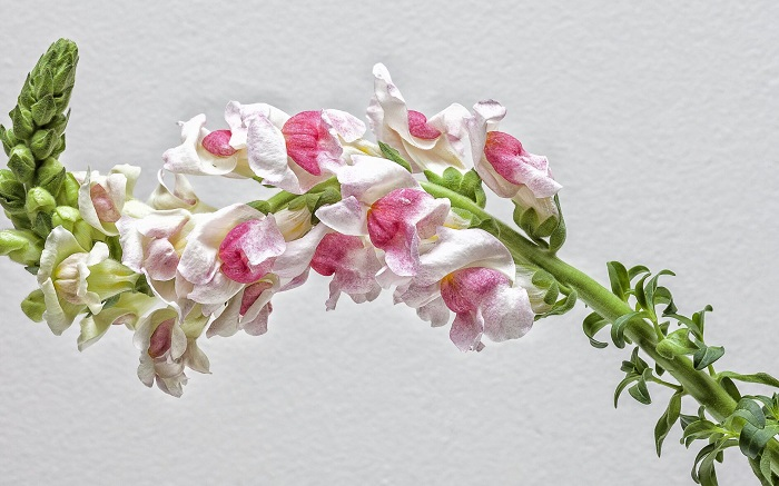 flor dragao 1 - Descubra 17 Fatos Surpreendentes sobre Jardins