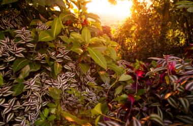 Conheça as 12 PLANTAS RARAS do Mundo