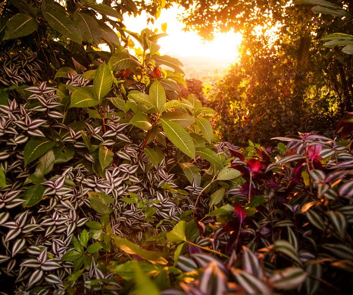 plantas raras - Conheça as 12 PLANTAS RARAS do Mundo