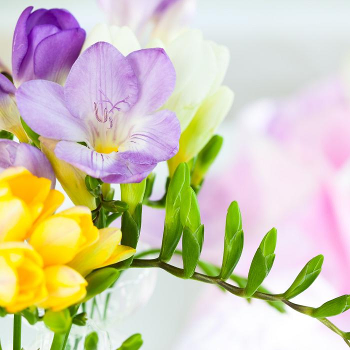 AS 10 FLORES mais perfumadas 1 - AS 10  FLORES MAIS PERFUMADAS | CONFIRA NOSSA LISTA