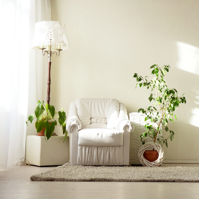 Combinando cores e plantas4 - PLANTAS DE INTERIOR - Conheça 7 CORES para Complementar