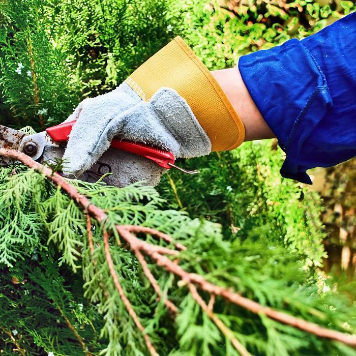 Os 8 Motivos para fazer Podas de plantas - 8 Motivos para Fazer PODAS DE PLANTAS