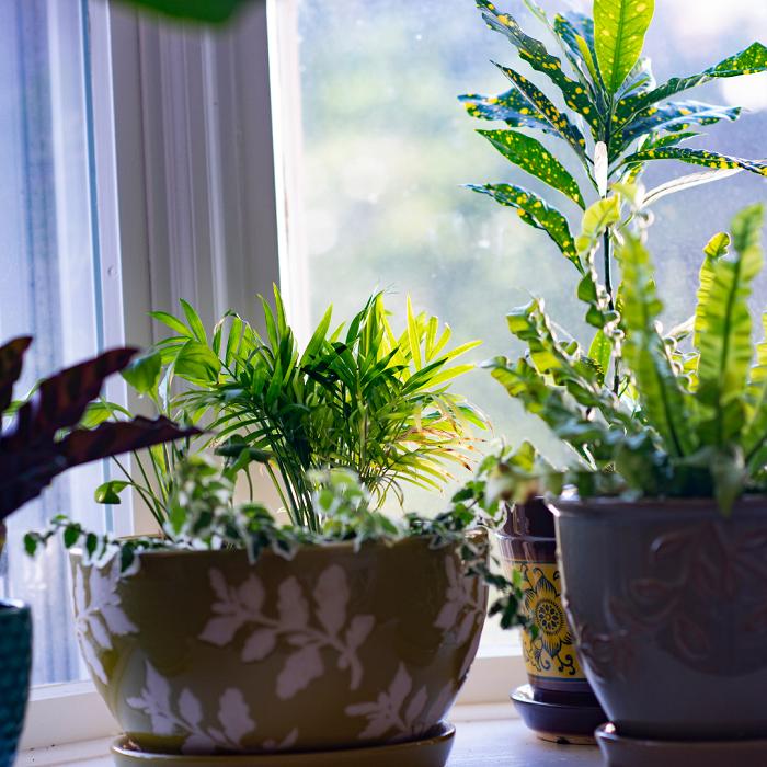 Plantas de interior - PLANTAS DE INTERIOR - Conheça 7 CORES para Complementar