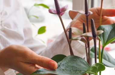 PLANTAS DE INTERIOR – Conheça 7 CORES para Complementar